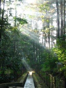 hutan-pagi